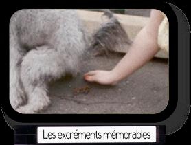 Les excréments les plus mémorables du cinéma