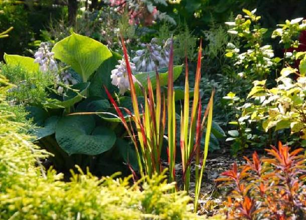 императа в саду