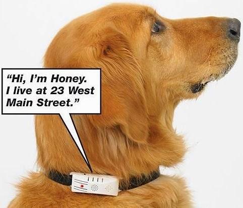 Electronic Dog Collar With Gps