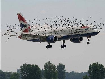 Image result for lixões aeroportos