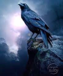 Misteri dan Keunikan Burung Gagak