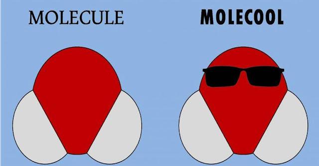 molecule vs. molecool