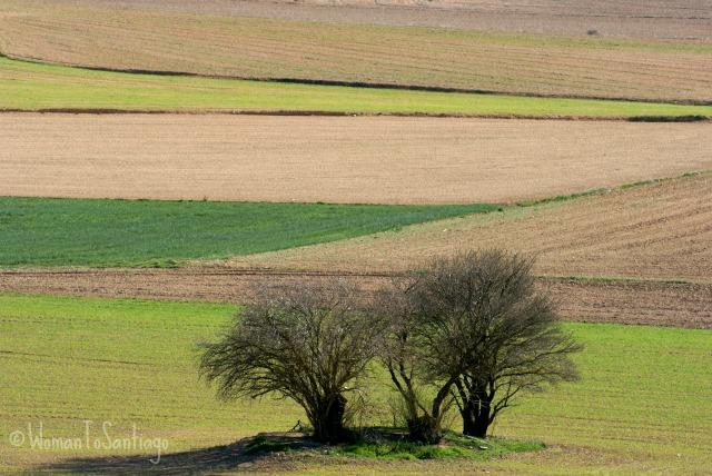 foto del campo