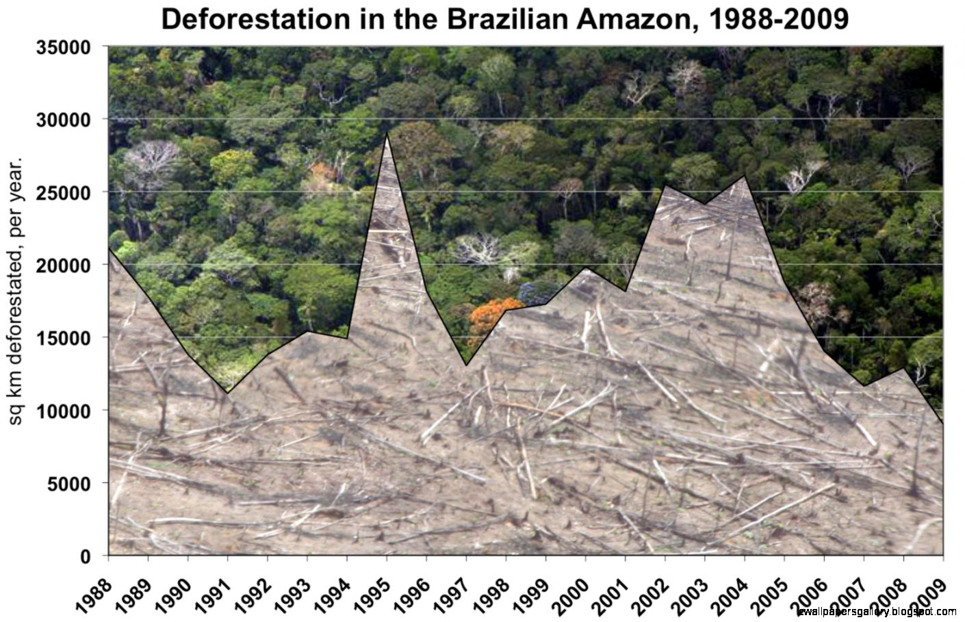 amazon rainforest layers diagram 70 chevelle wiring deforestation graph wallpapers gallery