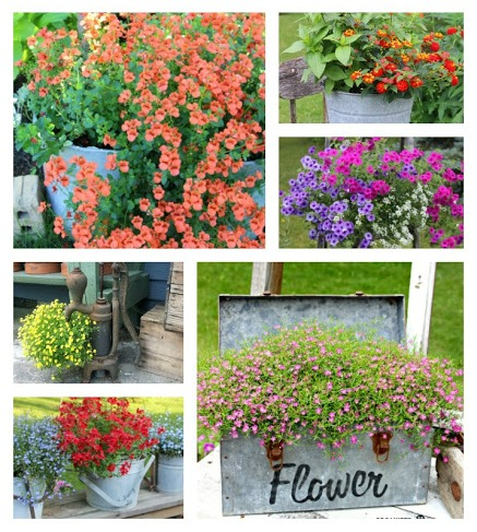 Move Over Petunias, Give Under-Used Annuals a Second Look www.organizedclutter.net