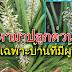 """""""ว่านงาช้าง"""" สมุนไพรไทย บ้านไหนยังไม่มีรีบไปหามาปลูกด่วน โดยเฉพาะบ้านที่มีผู้หญิง"""