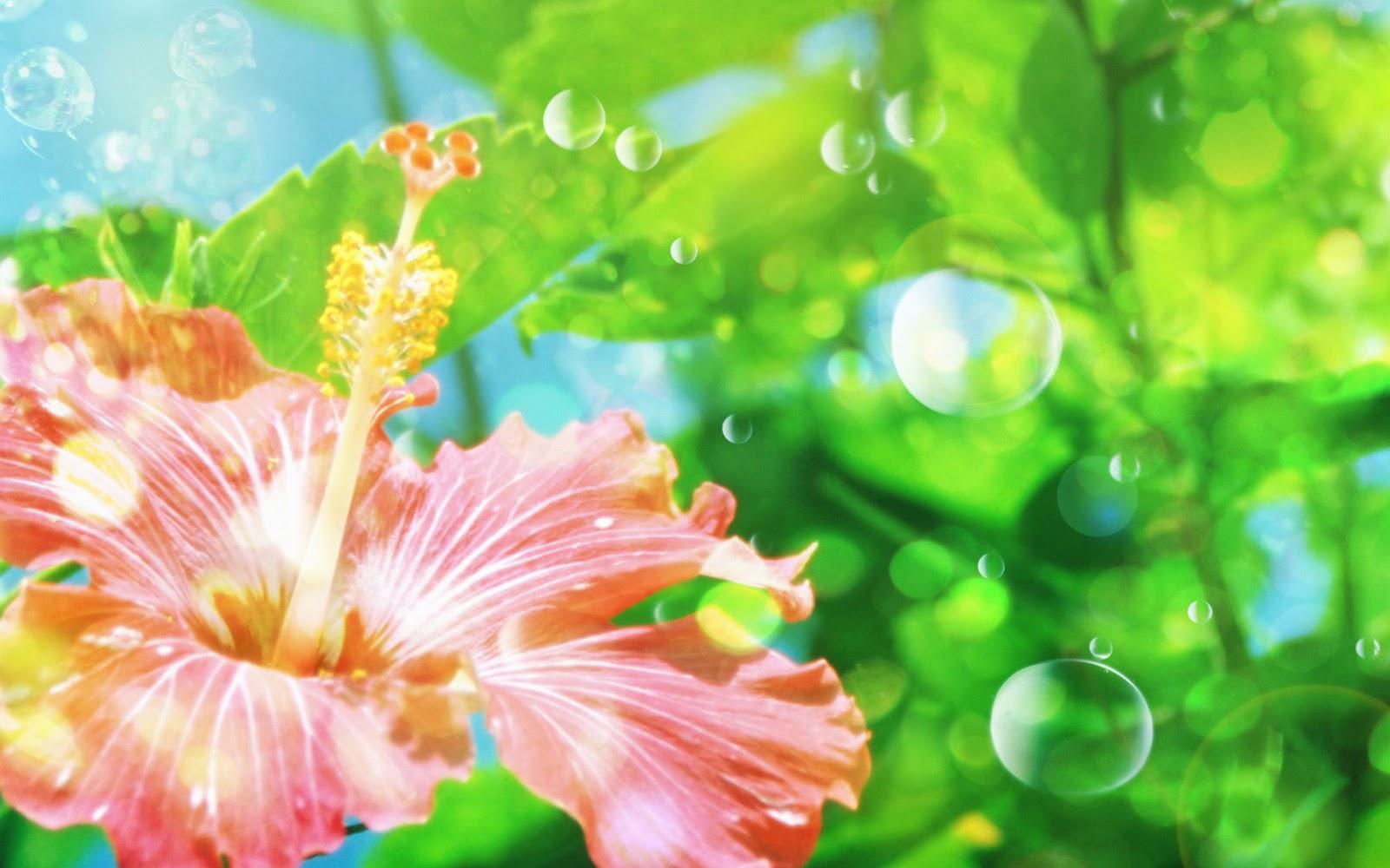 Koleksi Wallpaper Animasi Bunga Agatha Adkins