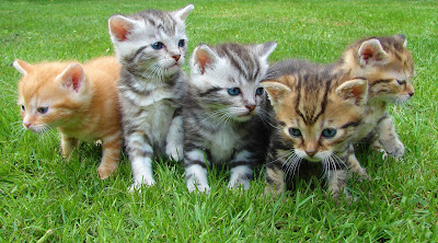 five kittens on grass lawn
