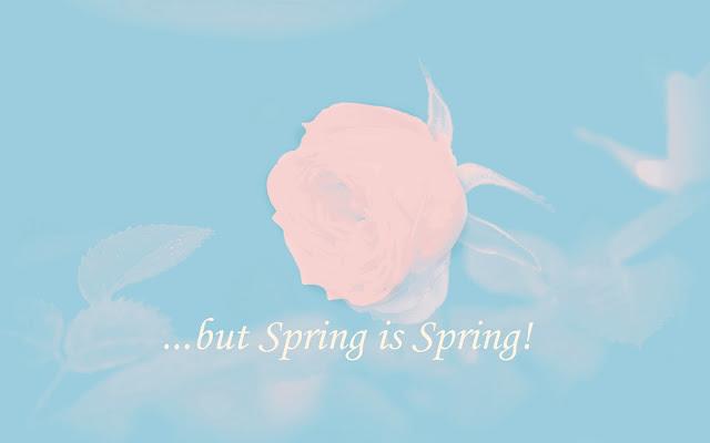 cutand-dry.blogspot rose spring card