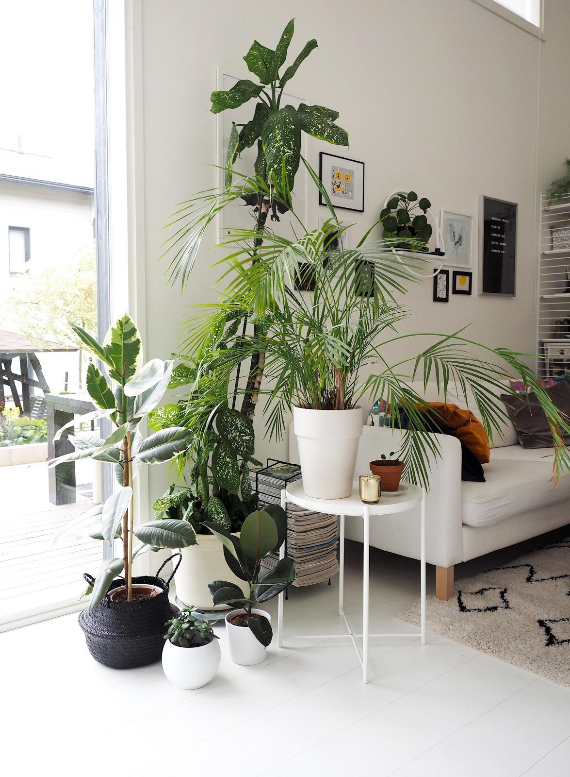 viherkasvit, sisustus, viihtyisä olohuone