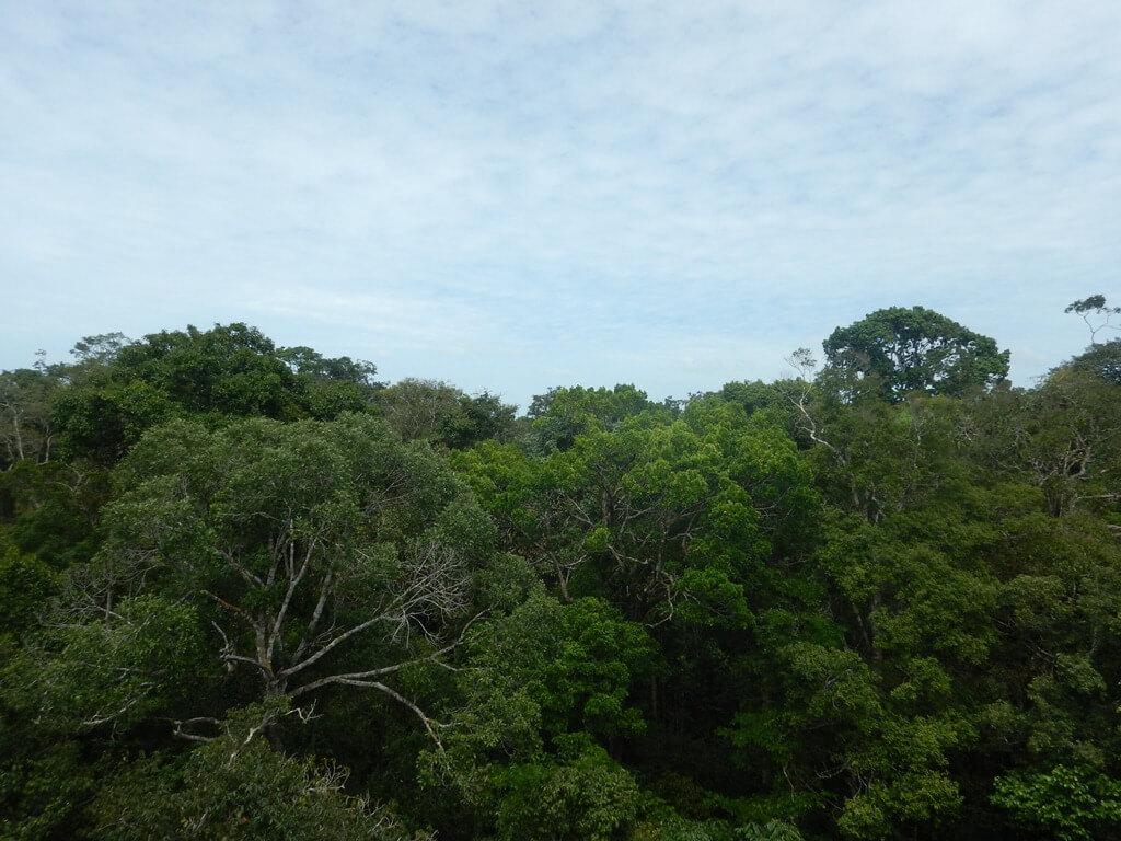 Museu da Amazônia Jardim Botânico de Manaus