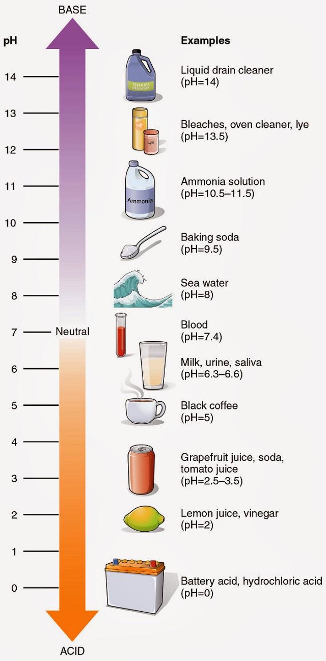 Baking Soda For Body's pH - pH Scale