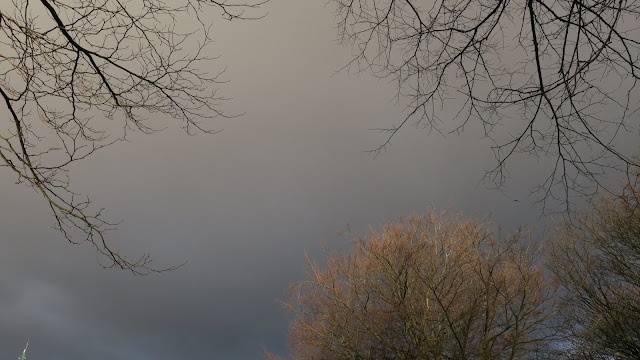Dark grey winter sky framed by bare twigs of treesA