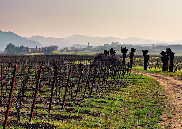 Berlucchi winery and Azelles vineyard