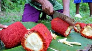 Buah merah dikenal sebagai buah tradisional dari Propinsi Papua BLOG PAGE ONE GOOGLE | Khasiat dan Manfaat Buah Merah Khas Papua