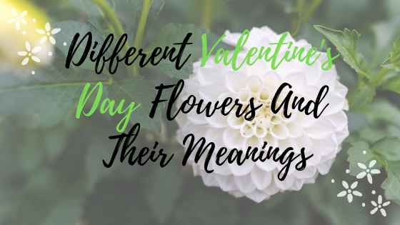 Different Valentine's Day Flowers And Their Meanings