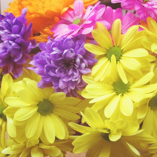 Chrysanthemums and daisies in purple, orange, yellow and pink Romantic bouquet of spring flowers, colourful nature.
