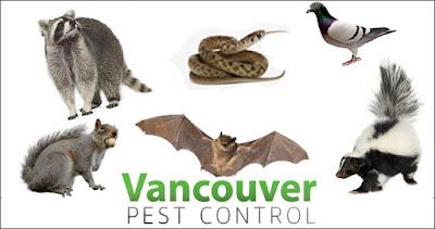 wildlife control vancouver