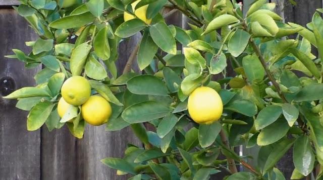 Pentingnya Vitamin C Bagi Tumbuh Kembang Anak