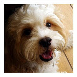 Zeus Boss And Honey Bishan Park Dog Run