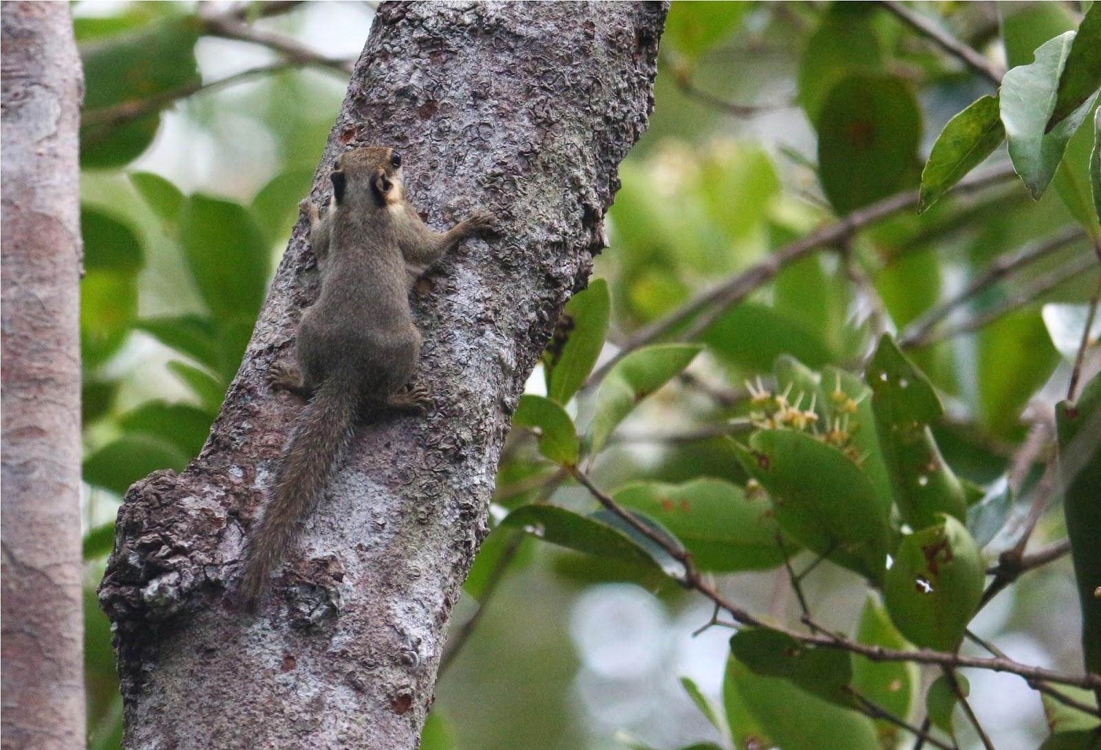 Seekor tupai pohon mencoba bersembunyi