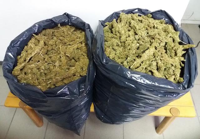 Εντοπίσθηκαν περισσότερα από 10 κιλά κάνναβης στην Κυνουρία - Αναζητείται ο κάτοχος