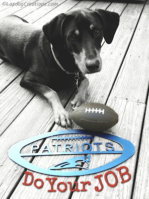 Doberman mix puppy Patriots football do your job