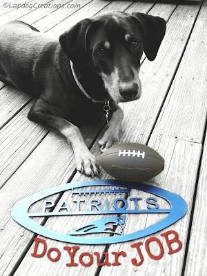 Doberman mix puppy Patriots football do your job