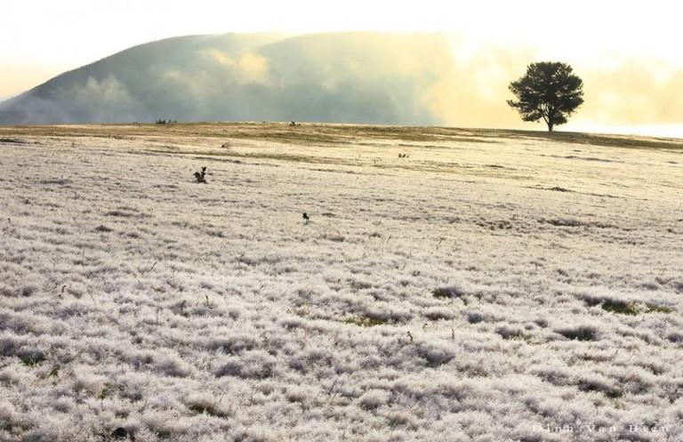 Đồng cỏ tuyết Đà Lạt