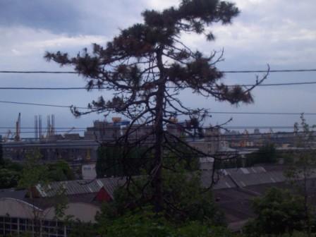 singur in bataia vantului