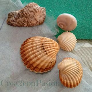 Conchas-de-mar-crea2-con-pasion