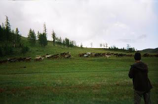 mongolia, mongolianhevonen, ratsastustmatka, riitta reissaa