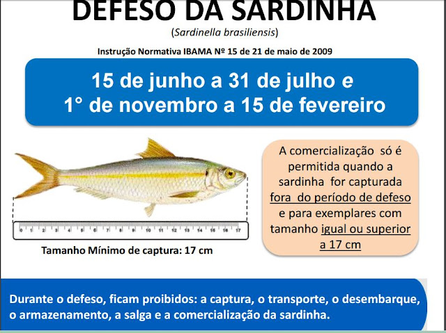 Defeso da Sardinha - 01/11 a 15/02