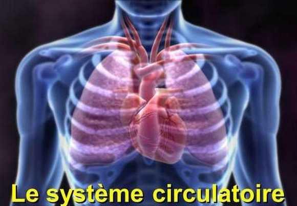 Problème circulatoire : anévrisme, phlébite, maladie de raynaud