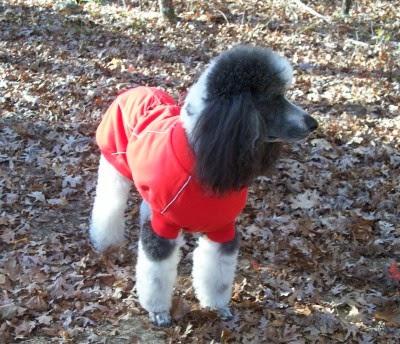 Poodle Blogger