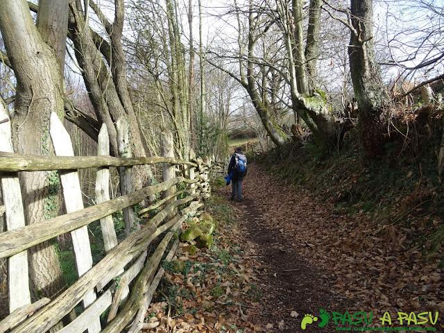 Sendero entre la valla y el bosque en Langreo