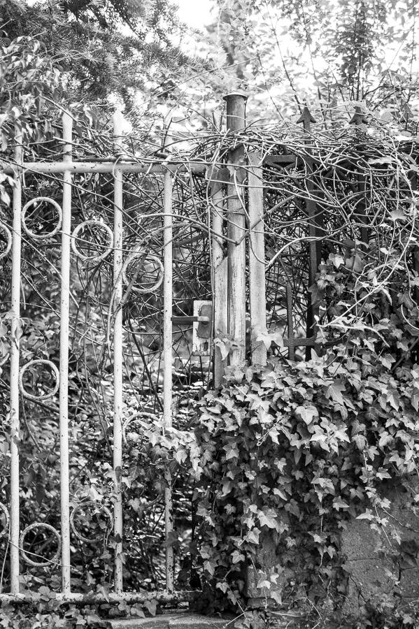 Blog + Fotografie by it's me! | fim.works | SchwarzWeissBlick No 20 | klassizistische Kirche von Schinkel | zugewuchtertes Gartentor