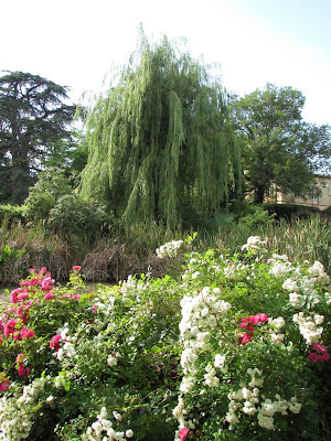 France: Weeping Willow - Flower Garden l LadyD Books