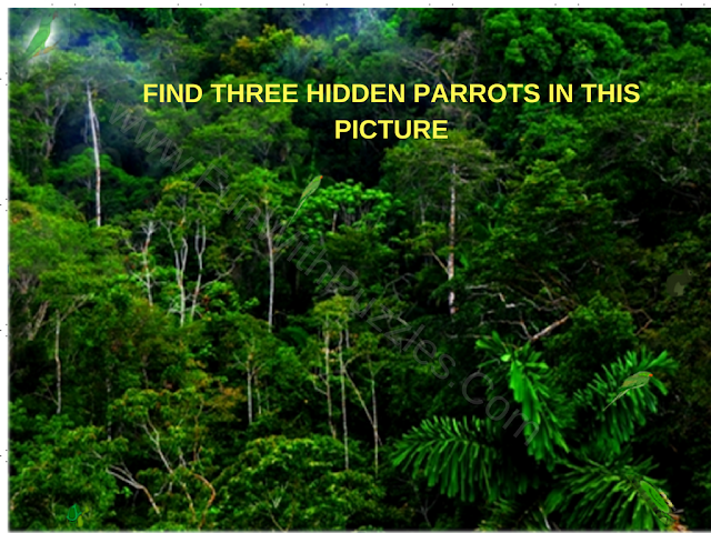 Three Hidden Parrots Puzzle Image