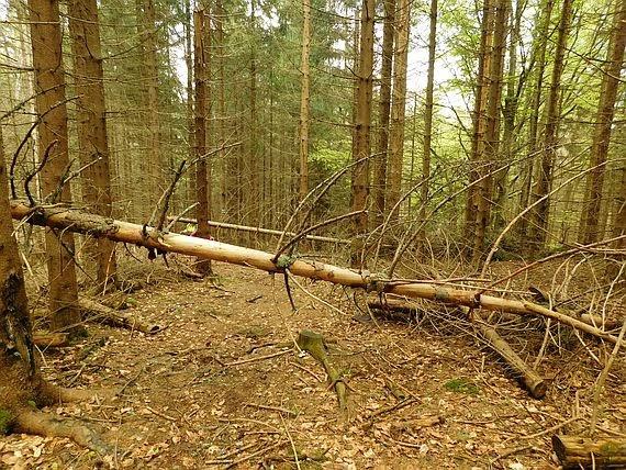 Złamane drzewo.