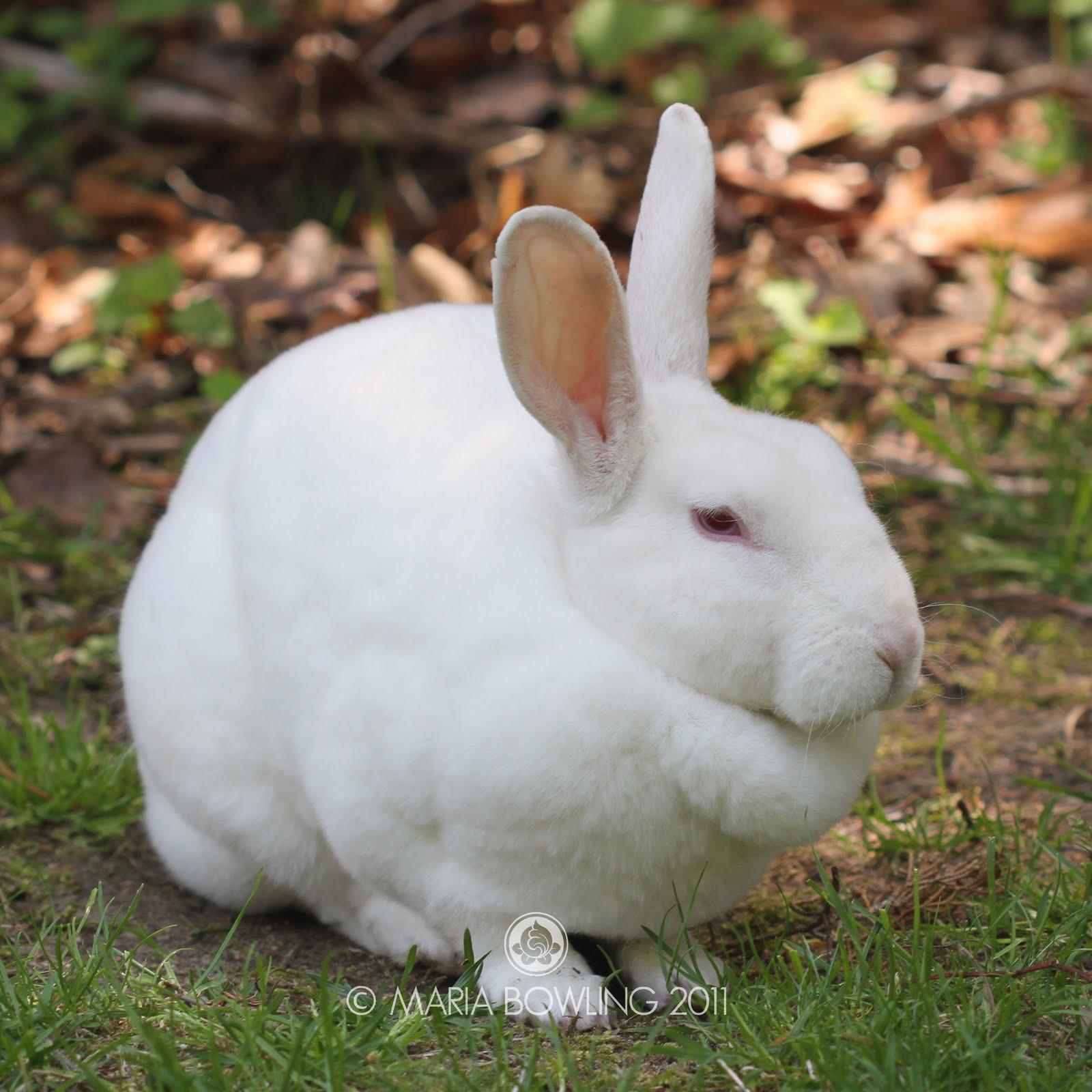 Pretty Medicine : Lilacs and the Magic Rabbit