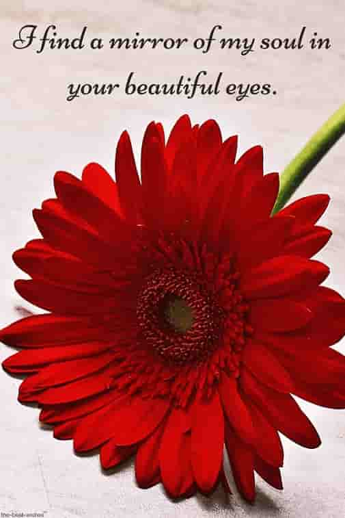 my soul quote with red flower