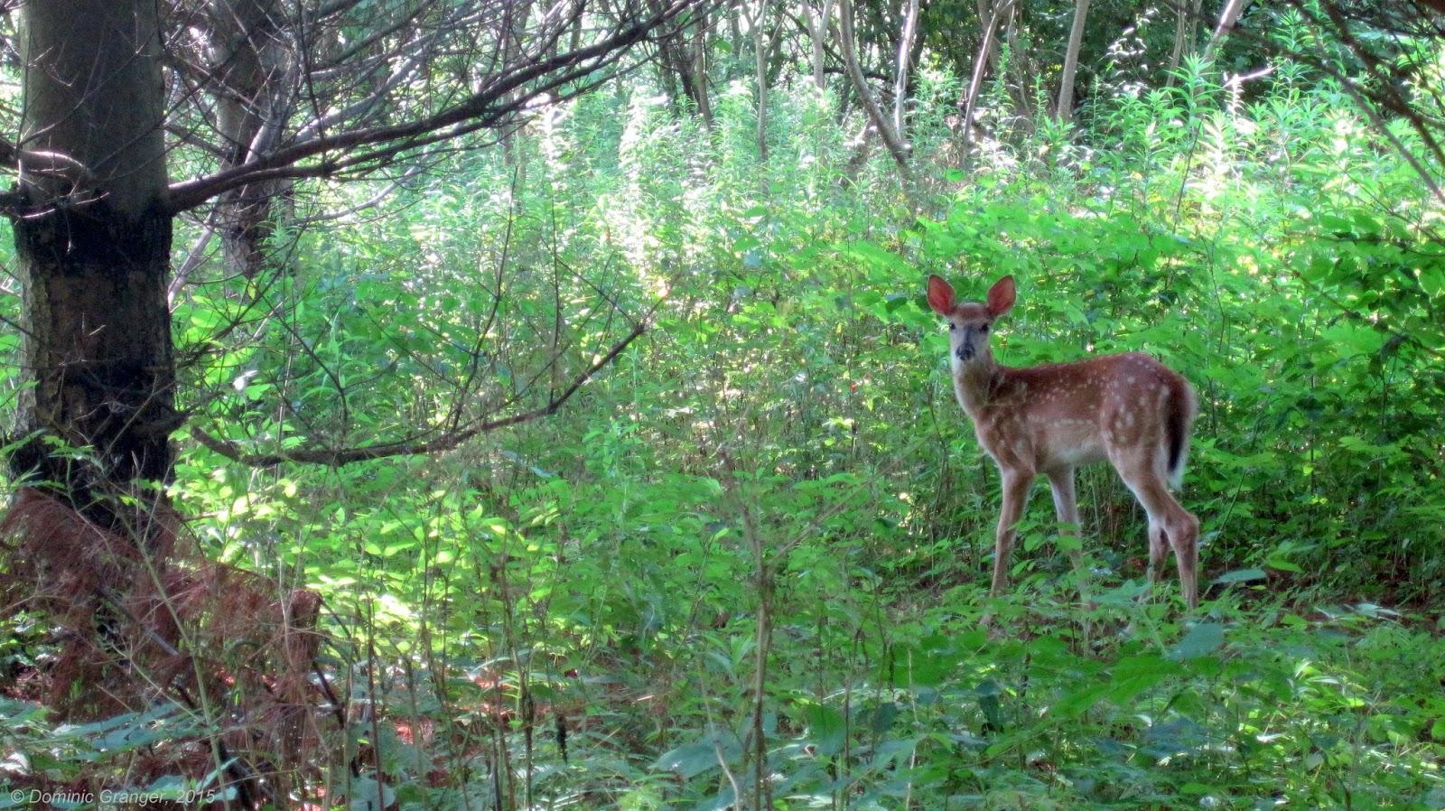Rencontre naturaliste