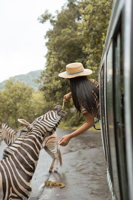 Menginap Bersama Jerapah Zebra Rusa Di Baobab Safari Prigen
