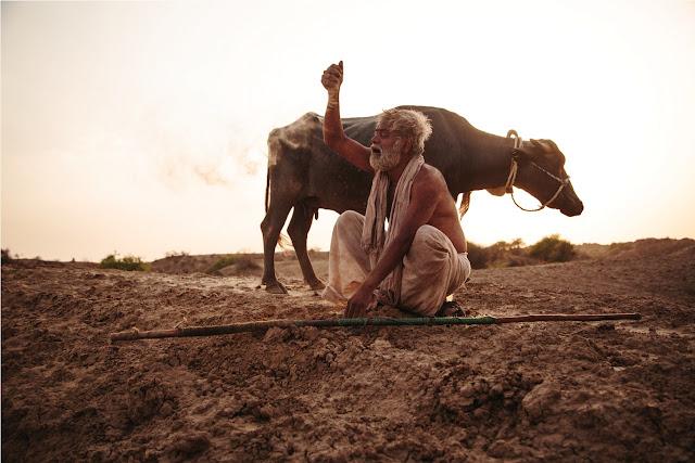 Sanjay Mishra, buffalo, Kadvi Hawa