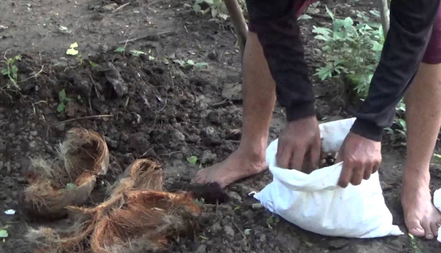Pemanfaatan limbah sabut kelapa sebagai pupuk organik