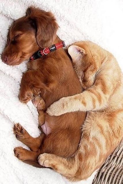 foto kucing dan anjit lagi akur