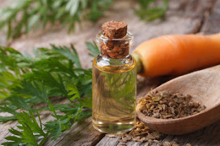 Carrot Seed Oil-Best Essential Oils for Aging Skin