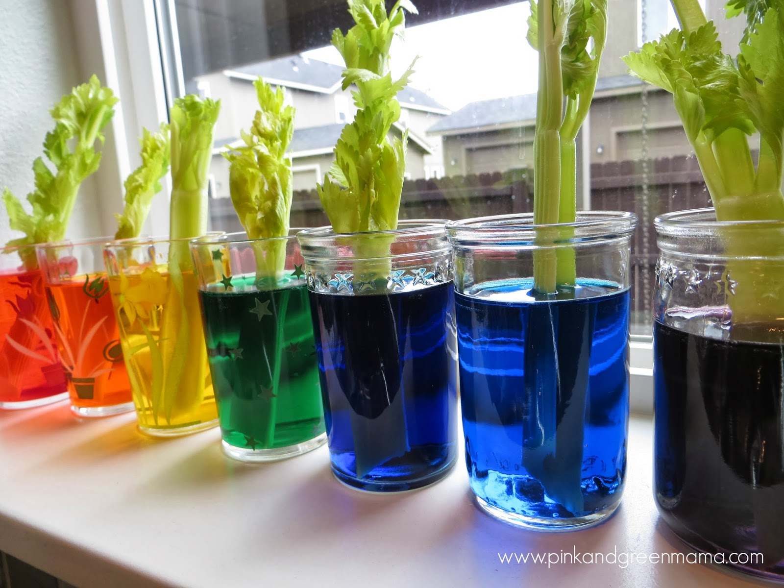 Pink and Green Mama: Kitchen Counter Science with Kids: Rainbow ...