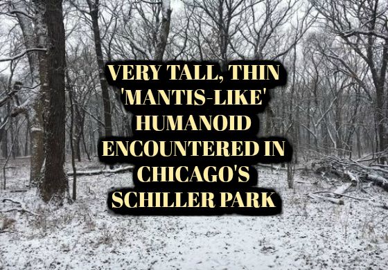 Very Tall, Thin 'Mantis-Like' Humanoid Encountered in Chicago's Schiller Park